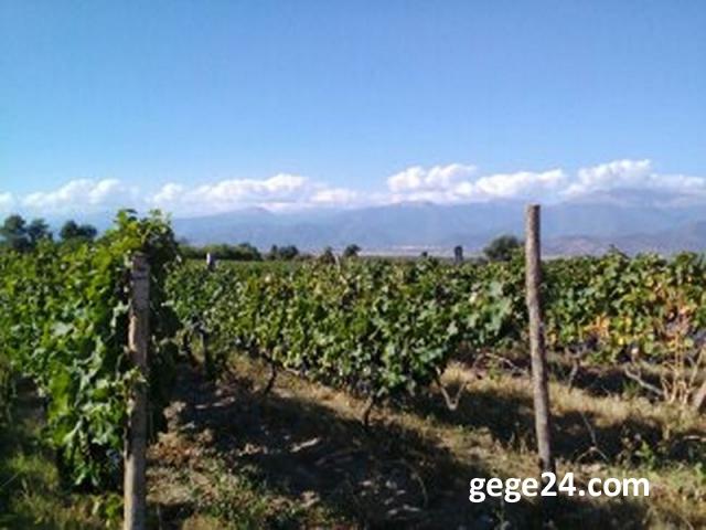 продам виноградник в грузии