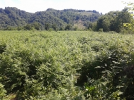 Земельный участок сельхозназначения в Ланчхути, Грузия. Фото 2