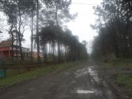 Земельный участок в Шекветили Фото 4
