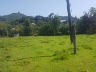 Земельный участок в Батуми. Грузия. Фото 4
