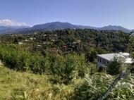 Купить частный дом в курортном районе Кобулети, Грузия. Мандариновый сад, Фруктовый сад. Фото 10
