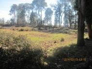 Земельный участок в курортном районе Шекветили, Грузия. Рядом с оживлённой трассой. Выгодно для инвестиций. Фото 5