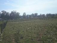 Земельный участок в Хелвачаури,Батуми,Грузия. Фото 4