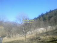 Земельный участок в Бакуриани, Грузия. Фото 4
