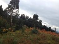 Участок с видом на море в Цихисдзири. Купить участок в Цихисдзири, Грузия. Фото 6