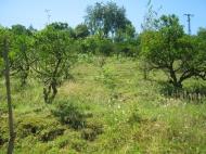 земельный участок в Махинджаури Фото 3