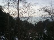 Участок с видом на море в Махинджаури, Грузия. Фото 2