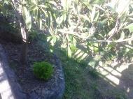 Дом с мандариновым садом в Батуми Фото 14