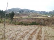 Земельный участок в Батуми с природным родником Фото 5