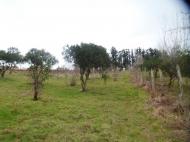 Земельный участок в Батуми с видом на море. Фото 2