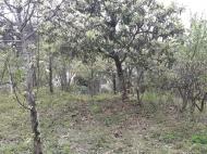 Продажа земли на Зеленом мысе Аджария Грузия Фото 5