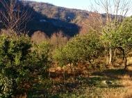 Земельный участок у водопада в Тхилнари. Купить земельный участок в пригороде Батуми. Фото 6