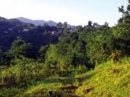 Купить по выгодной цене земельный участок в Грузии. Участок с природным родником у моря в Махинджаури, Грузия. Фото 4