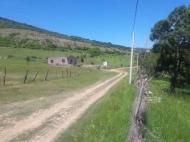 Купить земельный участок в пригороде Тбилиси. Фото 5