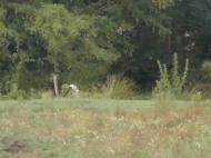 Земельный участок сельхозназначения в Ланчхути,Грузия. Фото 4