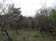Продажа земли на Зеленом мысе Аджария Грузия Фото 1