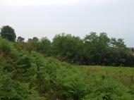 Продается земельный участок в Чакви,Грузия. Фото 5