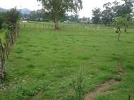 Купить земельный участок в пригороде Батуми,Хелвачаури,Грузия. Фото 4