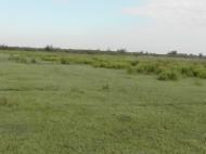 Земельный участок сельхозназначения в Ланчхути,Грузия. Фото 6