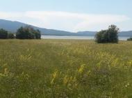 Продается земельный участок недалеко от озера Шаори Инвестиционная Рача. Грузия. Фото 2