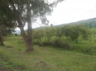 Земельный участок на трассе в Гонио Фото 3