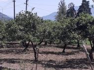Продается земельный участок в пригороде Батуми. Фото 2
