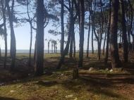 Продается участок в 500 метрах от моря в Григолети, Грузия. Фото 1
