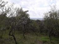 Продажа земли на Зеленом мысе Аджария Грузия Фото 4