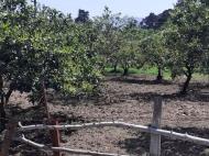 Продается земельный участок в пригороде Батуми, Грузия. Фото 5