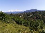 Купить частный дом в курортном районе Кобулети, Грузия. Мандариновый сад, Фруктовый сад. Фото 8