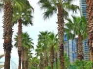 """Апартаменты на берегу моря в гостиничном комплексе """"ORBI Beach Tower"""" Батуми. Купить квартиру с видом на море в ЖК гостиничного типа """"ORBI Beach Tower"""" Батуми, Грузия. Фото 16"""