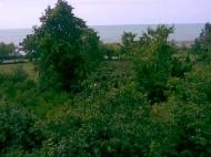 Земельный участок у моря в Чакви, Грузия. Возможна продажа по частям. Фото 2