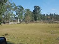 Земельный участок на берегу реки Чарнали, Батуми. Фото 8
