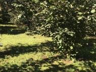 Земельный участок на продажу в курортной зоне Кобулети, Грузия. Фото 3