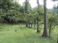 Продается земельный участок в Батуми!  Фото 2