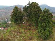 Продается земельный участок в пригороде Батуми, Ахалшени. Фото 1