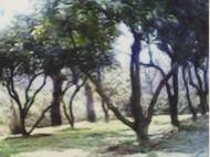 იყიდება მიწის ნაკვეთი სახლთან ერთად. ქობულეთი. საქართველო ფოტო 3