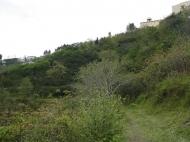 Участок в Батуми. Купить земельный участок в Батуми,Грузия. Фото 4
