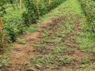 Продается действующий сельскохозяйственный комплекс. Грузия. Фото 7