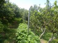 Земельный участок в Батуми. На склоне гор. Электричество, газ, вода. Фото 4