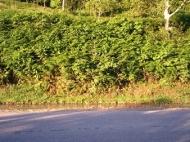 Участок с видом на реку и горы в окрестностях Батуми. Эрге,Грузия. Фото 3