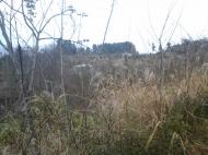 Купить земельный участок в Чакви, Аджария, Грузия. Фото 3
