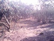 Дом с мандариновым садом в Батуми Фото 8