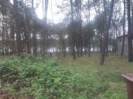 Земельный участок в Шекветили Фото 5