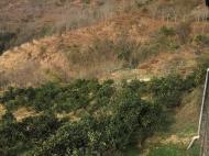 продажа земельного участка с видом на море и город Gantiadi Georgia на продажу Фото 2