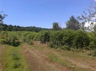 Земельный участок в Ланчхути. Купить земельный участок в Грузии. Фото 1