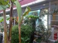 Аренда номеров в гостинице в центре Батуми, Грузия. Гостинично-развлекательный комплекс. Фото 21