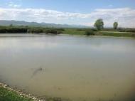 Земельный участок с озером в Марнеули, Грузия. Готовый бизнес. Фото 4