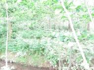Участок у реки в Батуми, Грузия. Фото 5