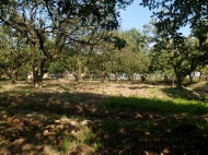Ground area ( A plot of land ) for sale at the seaside of Batumi Photo 5